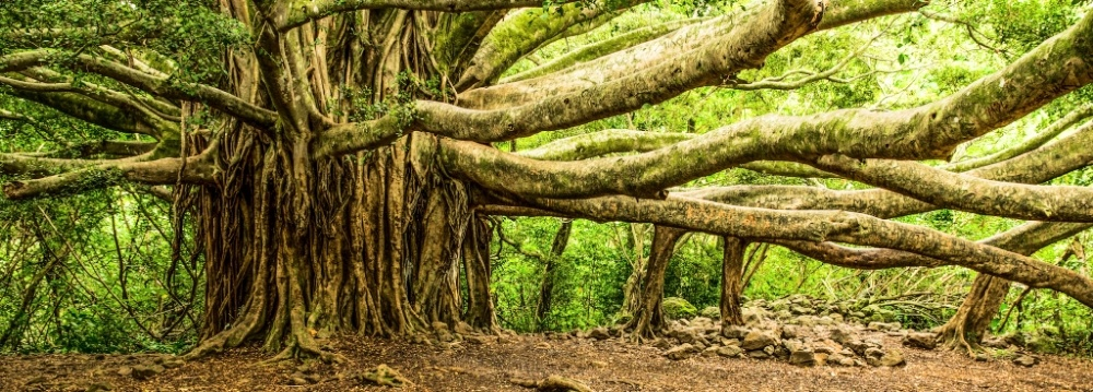 Trees have long symbolized growth